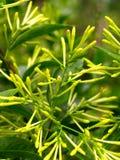 1 λουλούδι πράσινο Στοκ Εικόνες