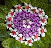 1 λουλούδι ρύθμισης στοκ εικόνες