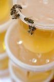 1 μέλι Στοκ Φωτογραφία