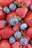 1 μούρο berrylicious Στοκ Εικόνες