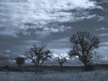 1 ξεραμένα δέντρα Στοκ Φωτογραφία