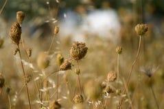 1 ξηρό φυτό Στοκ Εικόνες