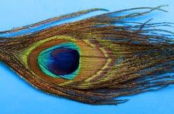 1 ουράνιο τόξο φτερών Στοκ Εικόνες