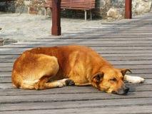1 οδός σκυλιών Στοκ φωτογραφία με δικαίωμα ελεύθερης χρήσης