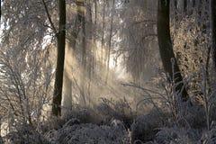 1 παγωμένα δέντρα Στοκ Εικόνα