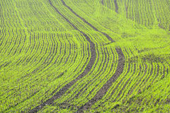 1 πεδίο πράσινο αριθ. Στοκ εικόνες με δικαίωμα ελεύθερης χρήσης
