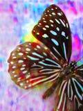 1 πεταλούδα ζωηρόχρωμη Στοκ φωτογραφίες με δικαίωμα ελεύθερης χρήσης