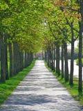 1 σήραγγα δέντρων Στοκ Εικόνες