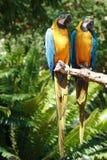 1 σειρά πουλιών τροπική Στοκ εικόνα με δικαίωμα ελεύθερης χρήσης