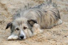 1 σκυλί αριθ. Στοκ Εικόνες