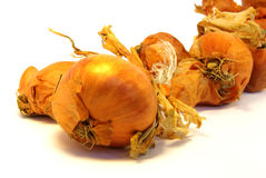 1 στενό κρεμμύδι επάνω Στοκ Εικόνα