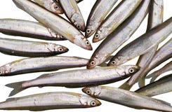 1 τήξη ψαριών Στοκ φωτογραφία με δικαίωμα ελεύθερης χρήσης