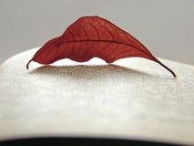 1 φθινοπωρινή ανάγνωση Στοκ φωτογραφίες με δικαίωμα ελεύθερης χρήσης