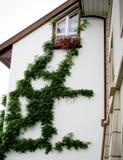 1 φυτό γκράφιτι Στοκ Εικόνες