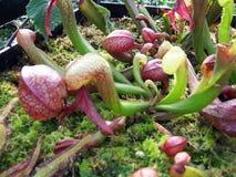 1 φυτό σταμνών στοκ φωτογραφίες με δικαίωμα ελεύθερης χρήσης