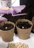 1 φυτό των σπόρων Στοκ εικόνες με δικαίωμα ελεύθερης χρήσης