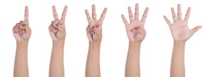 1 χέρι 2 3 4 5 Στοκ Εικόνα