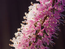 1 χειμώνας λουλουδιών Στοκ Φωτογραφία