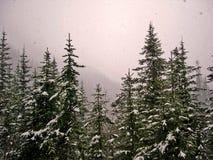 1 χιονοπτώσεις Στοκ Εικόνα