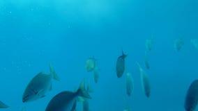 1 ψάρι Στοκ εικόνα με δικαίωμα ελεύθερης χρήσης