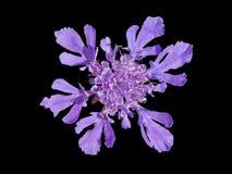 1 ως snowflake λουλουδιών Στοκ Εικόνες