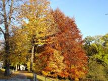 1 όμορφη πτώση ημέρας Στοκ φωτογραφία με δικαίωμα ελεύθερης χρήσης
