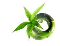 1 бамбук Стоковое Фото