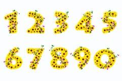 1 белизна солнцецвета 9 изолированная предпосылкой номеров Стоковая Фотография