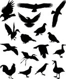 1 вектор силуэта птиц Стоковое фото RF
