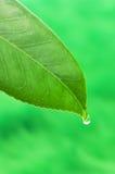 1 вода листьев падения Стоковое Изображение