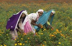 1 выбирать цветков стоковые фотографии rf