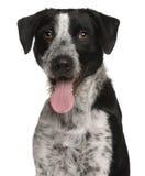 1 год близкой собаки breed смешанный старый поднимающий вверх Стоковые Фотографии RF