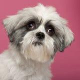 1 год близкой собаки breed смешанный старый поднимающий вверх Стоковая Фотография RF