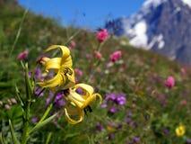 1 гора цветков Стоковая Фотография RF