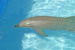 1 дельфин Стоковое фото RF