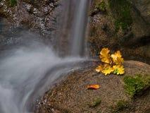 1 желтый цвет потока листьев Стоковая Фотография