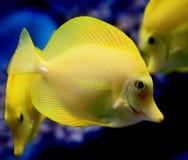1 желтый цвет тяни Стоковые Изображения
