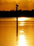 1 заход солнца пеликана Стоковое Изображение