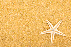 1 звезда моря Стоковое Изображение RF