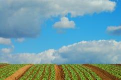 1 зеленый цвет поля стоковое фото rf