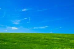1 зеленый цвет поля стоковые изображения
