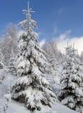 1 зима ландшафта Стоковая Фотография RF