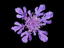 1 как снежинка цветка Стоковые Изображения