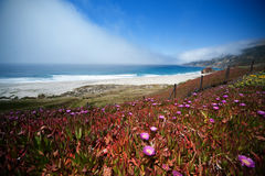 1 Калифорния Стоковые Изображения