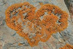 1 камень лишайника Стоковая Фотография RF
