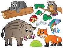 1 комплект пущи шаржа животных Стоковое Изображение