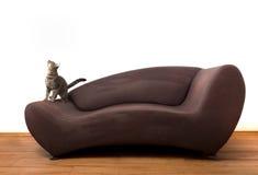 1 котенок Стоковые Изображения