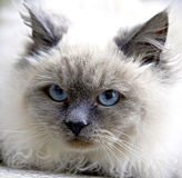 1 кот Стоковое фото RF