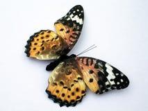 1 красный цвет бумаги бабочки admiral Стоковая Фотография RF