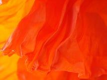 1 красный цвет мака листьев детали Стоковое Фото